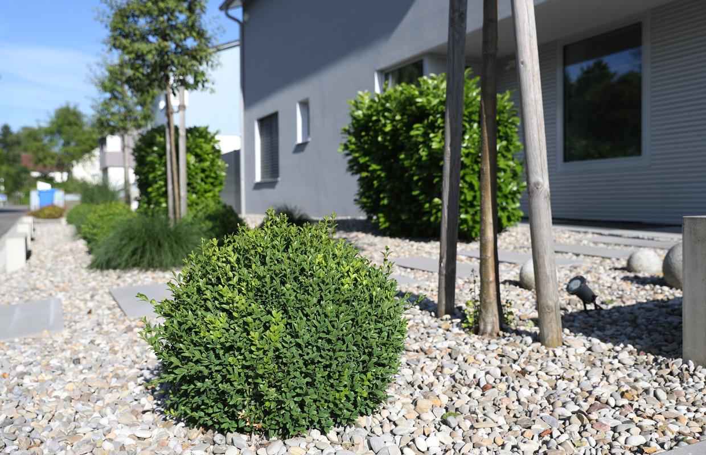 freiraum-schmid-gartenbau-projekt-pool-memmingen-04