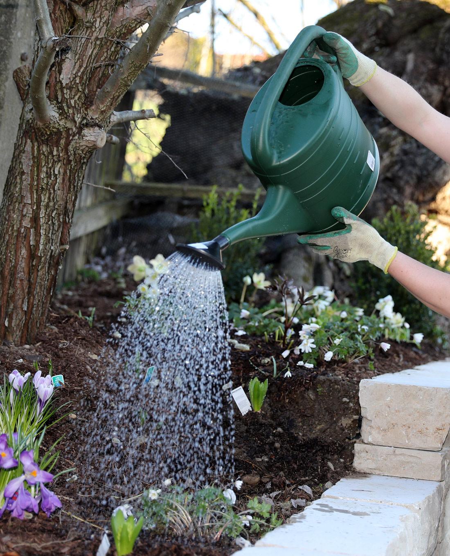 Gartenpflege: Pflanzengießen