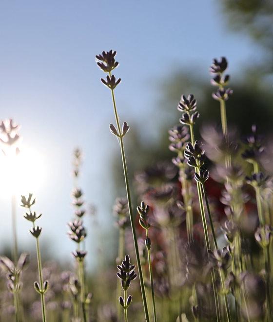 Gartenwelten Mediterraner Garten