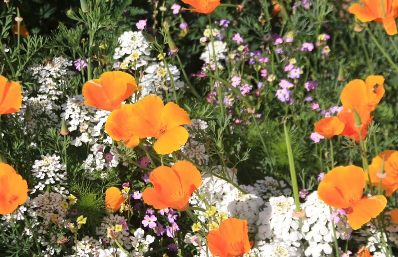 Bunte Blumen in Bauerngarten