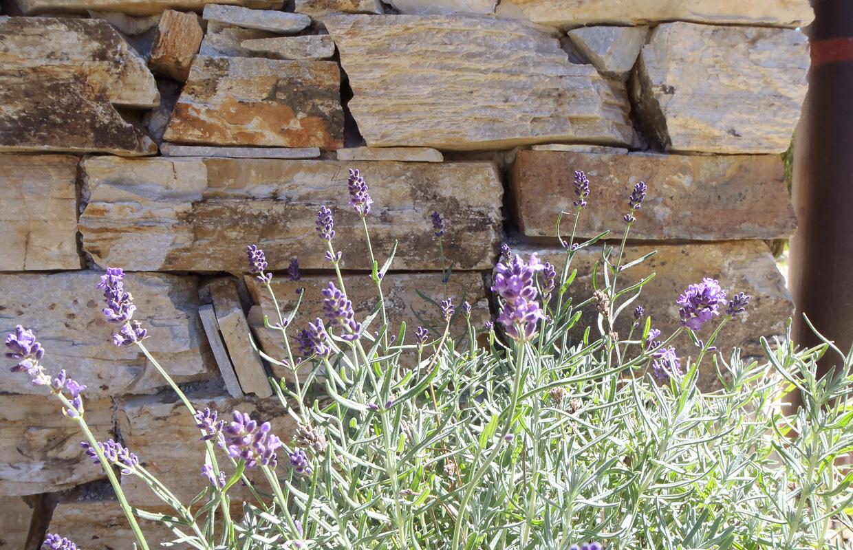 Natursteinmauer in mediterranem Garten