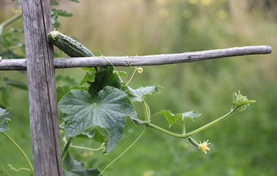 Pflanzen im Hochbeet im Bauerngarten