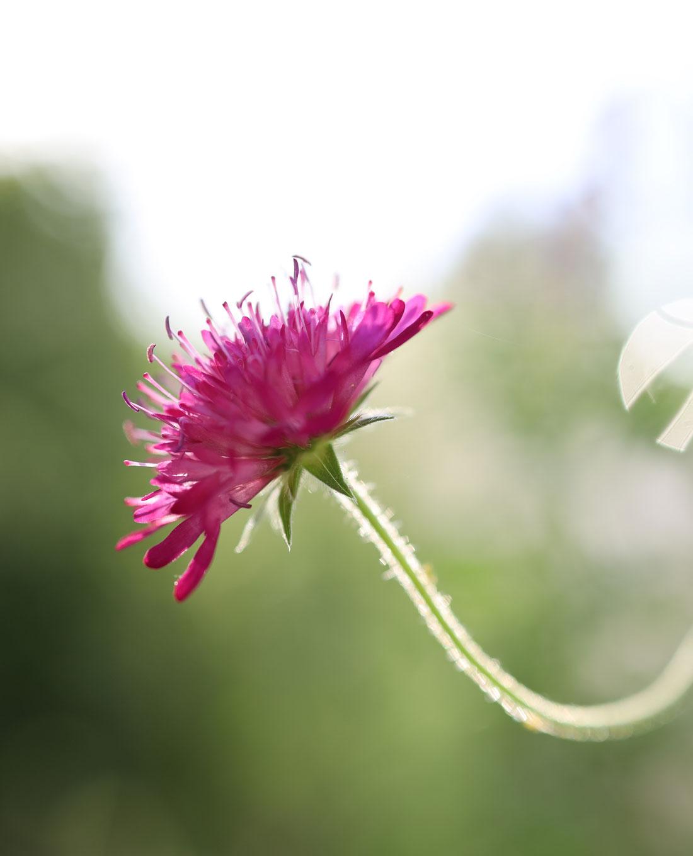 Bepflanzung | Gartengestaltung | Lieblingsblumen